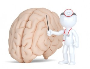 Doctor pointingat human brain. Medical illustration. Isolated. Contains clippin path.